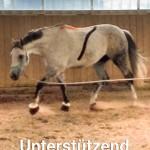 Pferde getaped ohne Wasserzeichen 11 bearb